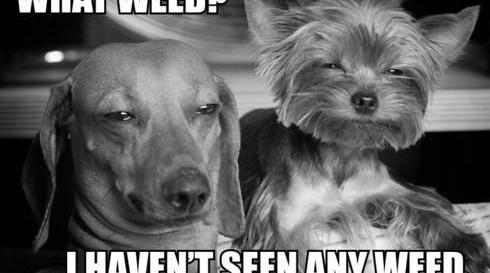 what-weed-meme