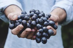 farmer-food-fruits-5122-825x550