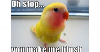 funny-bird-blushing-yellow3
