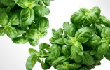 Small But Mighty: 6 Wonderful Herbs To Boost Your Health