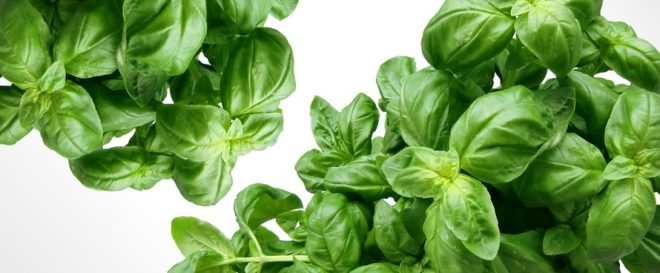 Herbs To Boost Your Health