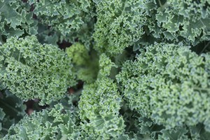 food salad-texture-green-kale
