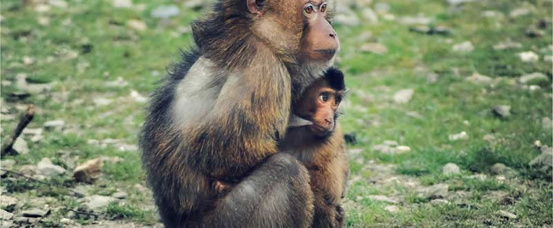 cute-animals-monkeys-young-1320x546