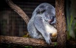12 Ways How Sleeping More Can Boost Your Productivity