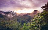 7 Scientifically-proven Benefits of Ayahuasca – Sacred Medicine from the Amazon Jungle