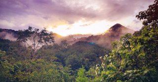 7 Scientifically-proven Benefits of Ayahuasca Medicine